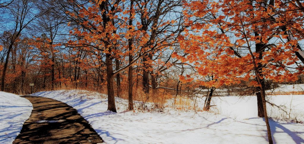 snowy scene with fall leaf colors